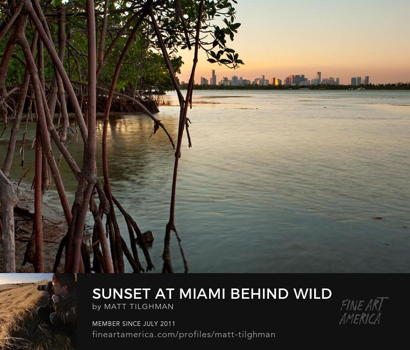 Miami Prints