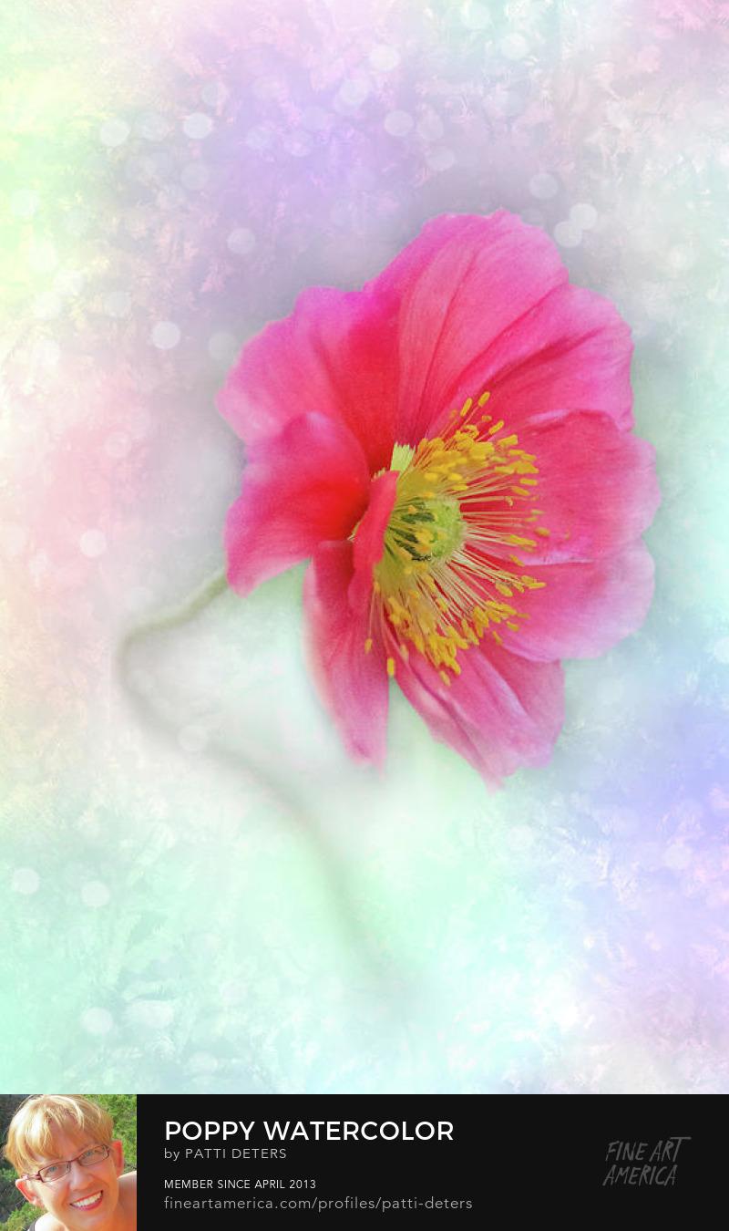 poppy pink pastel watercolor vertical digital art ©patti-deters.pixels.com