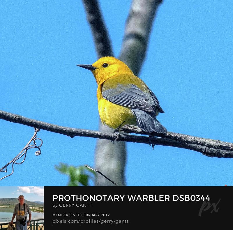 Photography Prints Online