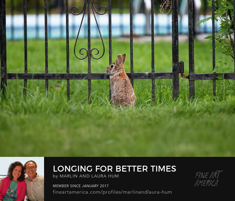 Longing for Better Times by Marlin and Laura Hum