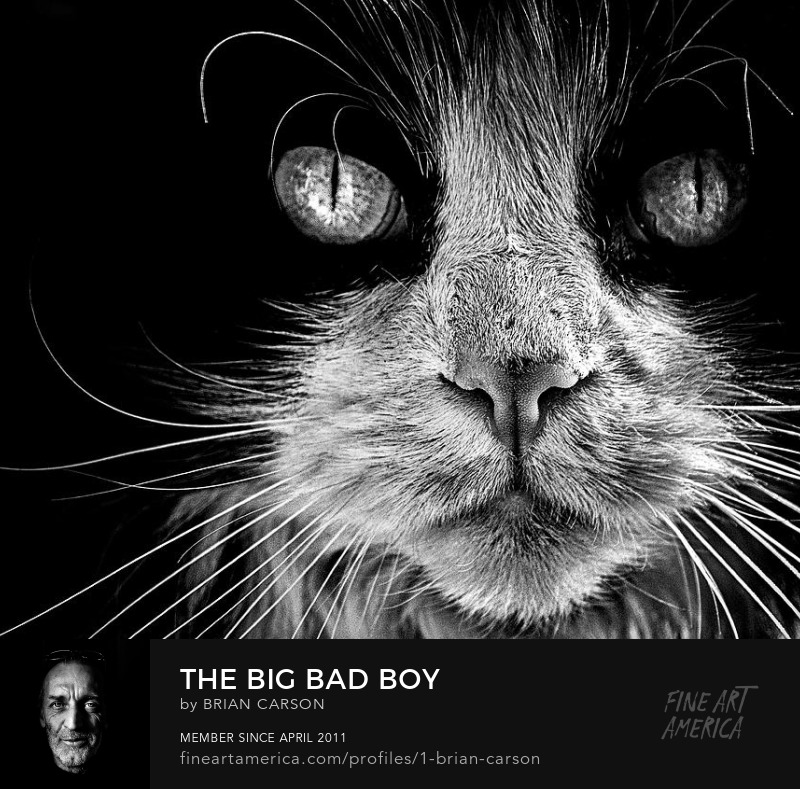 The Big Bad Boy by The Learning Curve Photography on Pixels