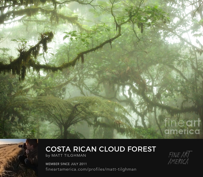Costa Rica Cloud Forest Photography Prints