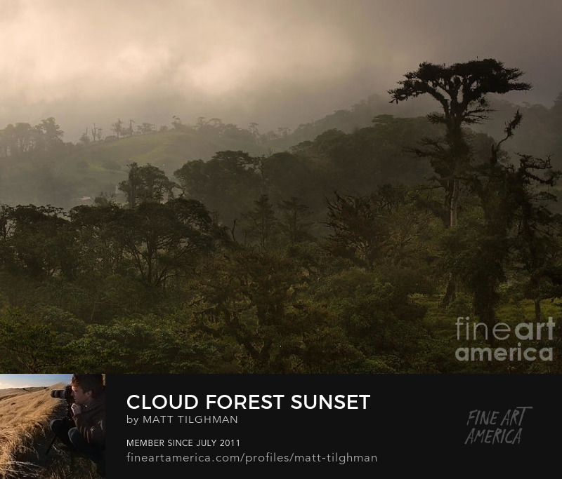 Costa Rica Cloud Forest Art Online