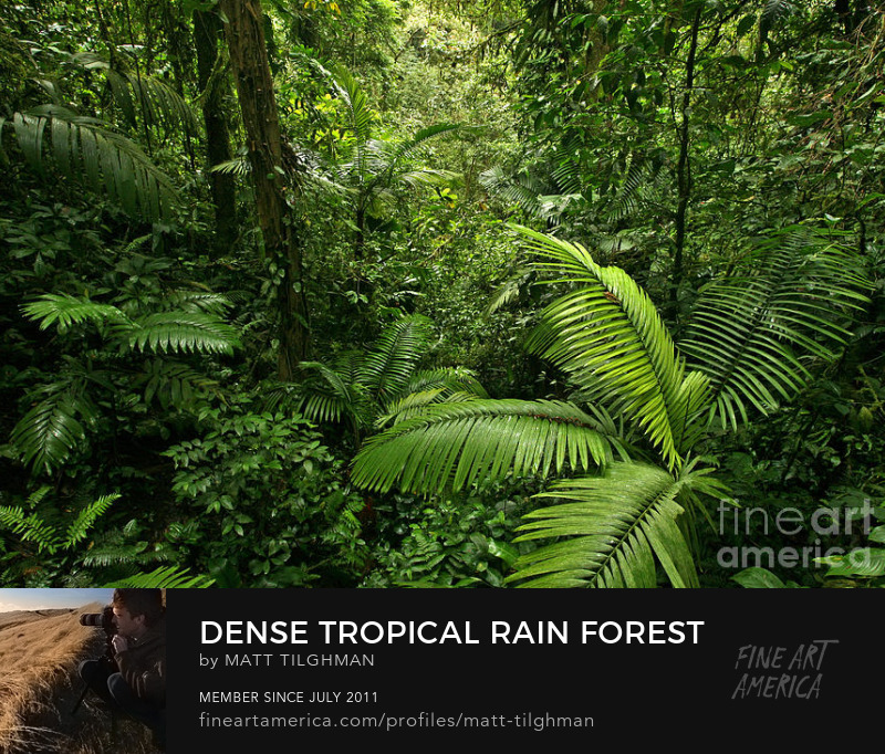 Dense Tropical Rain Forest Art Prints