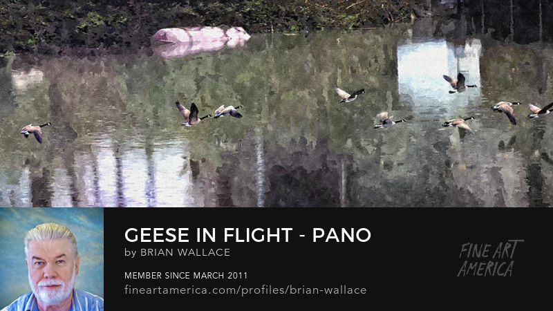 Geese In Flight Pano Watercolor FX by Brian Wallace