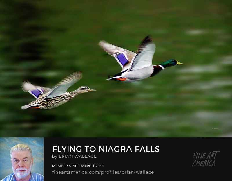 Flying to Niagra Falls For Our Honeymoon by Brian Wallace