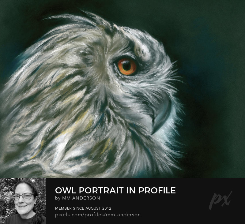 Owl Portrait Wall Art Prints
