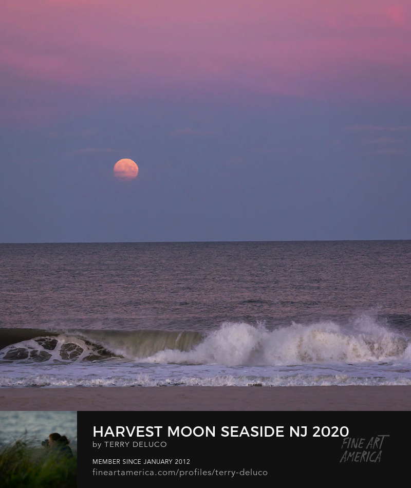 Terry DeLuco Harvest Moon Seaside Prints