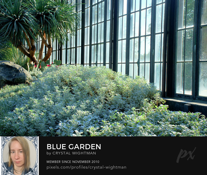 A botanical garden with various plants, flowers, and trees ranging of blue and green colors