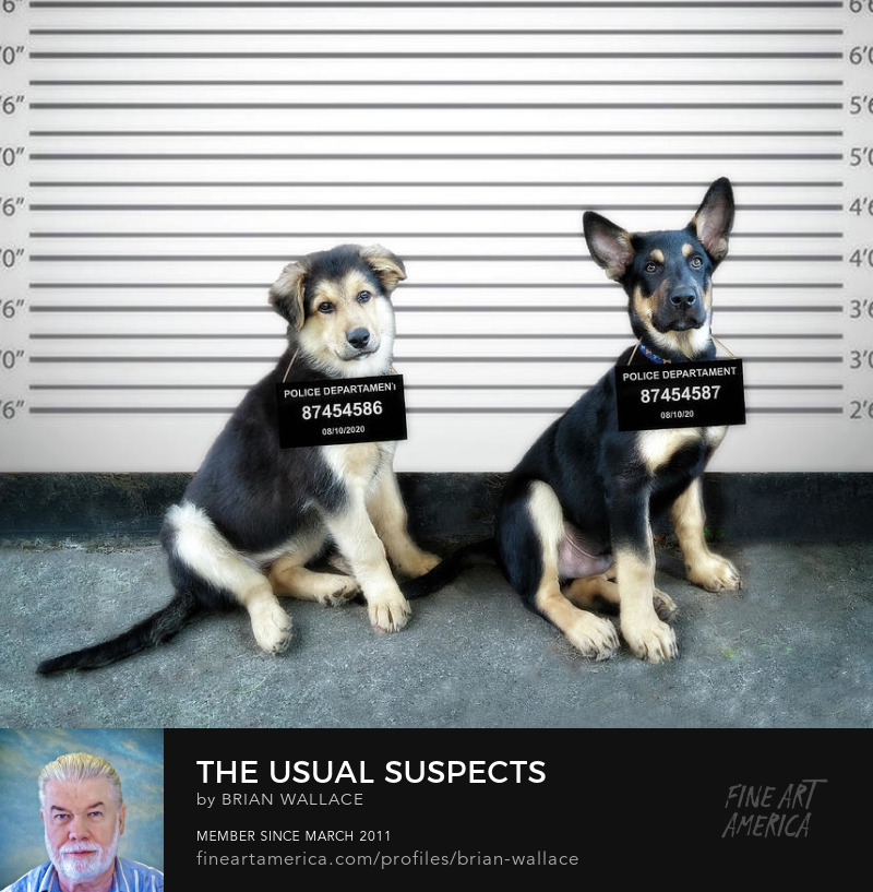 The Usual Suspects by Brian Wallace