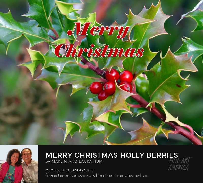 Merry Christmas Holly Berries Marlin and Laura Hum