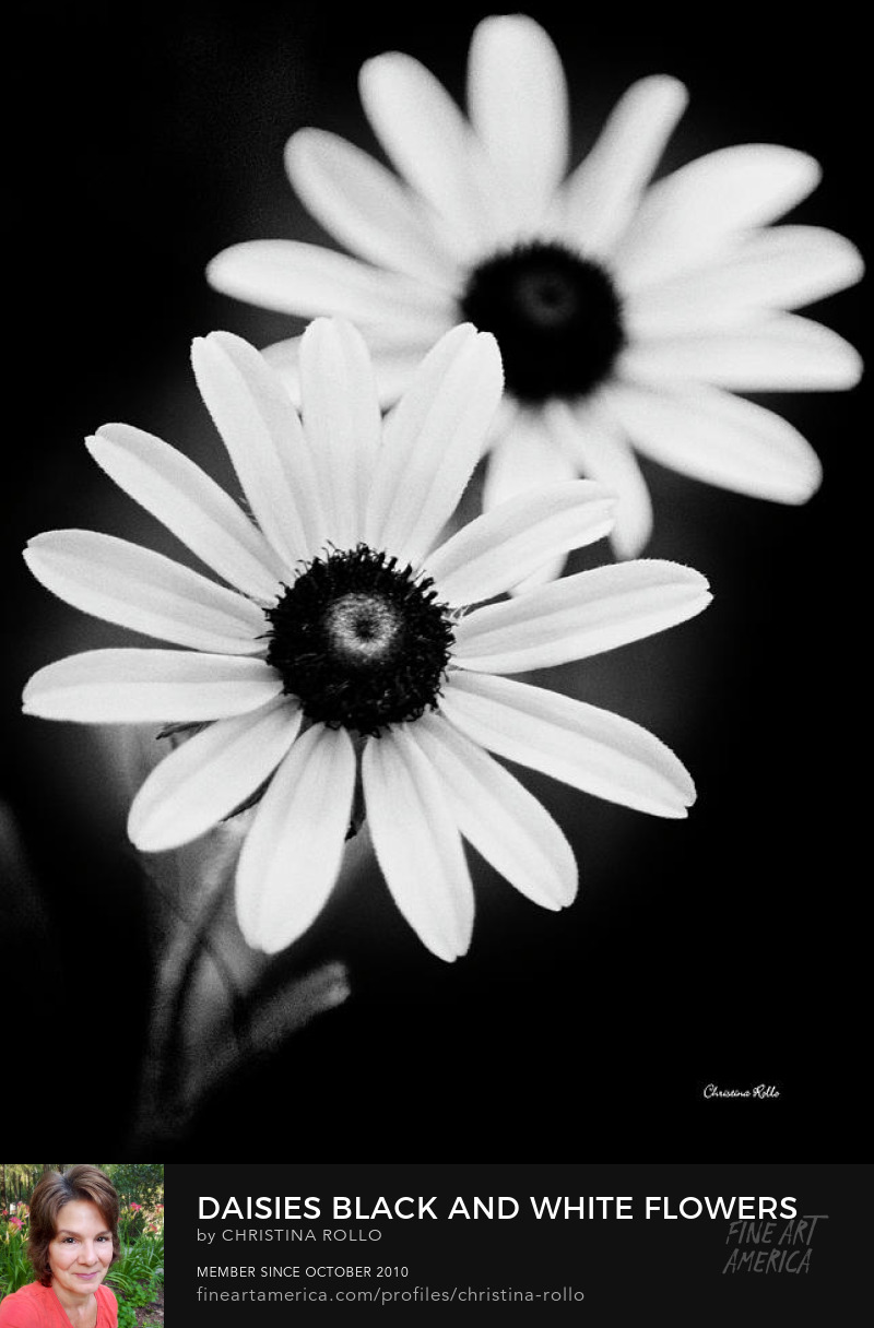 Daisies Black And White Flower Prints for Sale