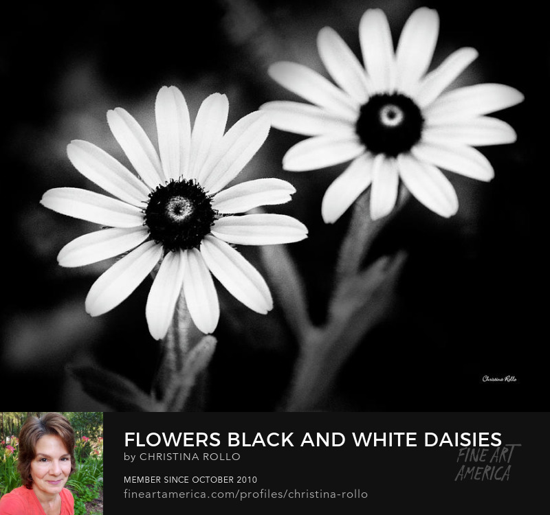 Flowers Black And White Daisy Prints for Sale