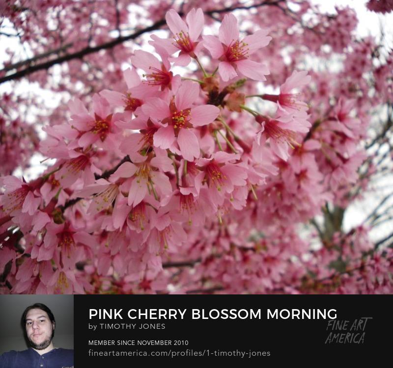 sakura tree flower