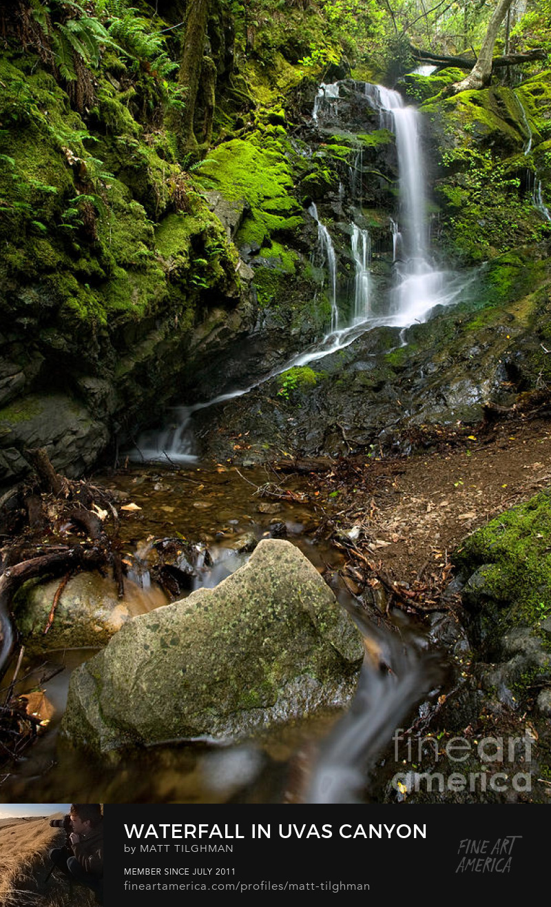 Uvas Canyon Waterfall Art Prints