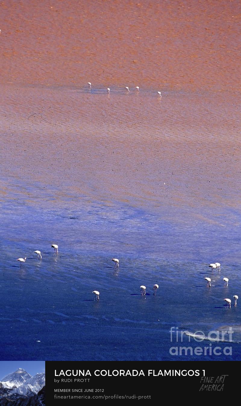 flamingos on Laguna Colorada by Rudi Prott