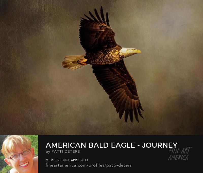eagle painterly flight ©patti-deters.pixels.comt