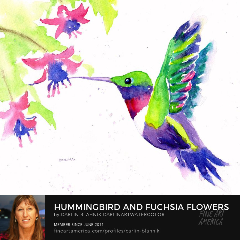Colorful Hummingbird Watercolor Painting Print by Carlin Blahnik
