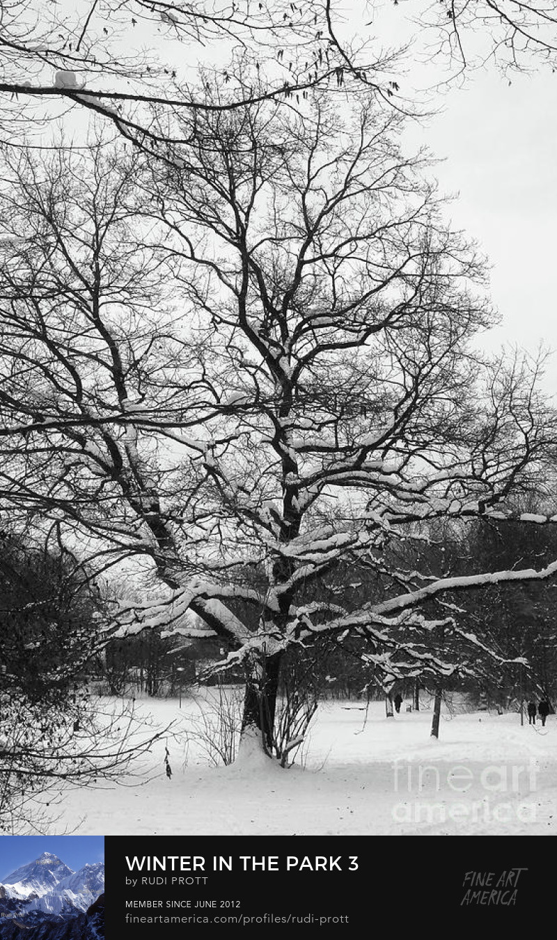 winter tree by Rudi Prott
