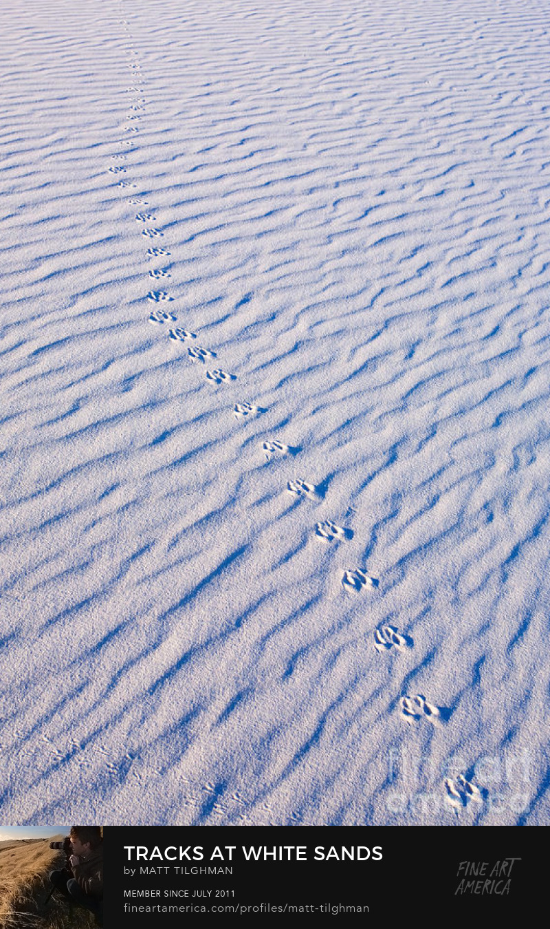 Tracks in White Sand New Mexico Art Prints