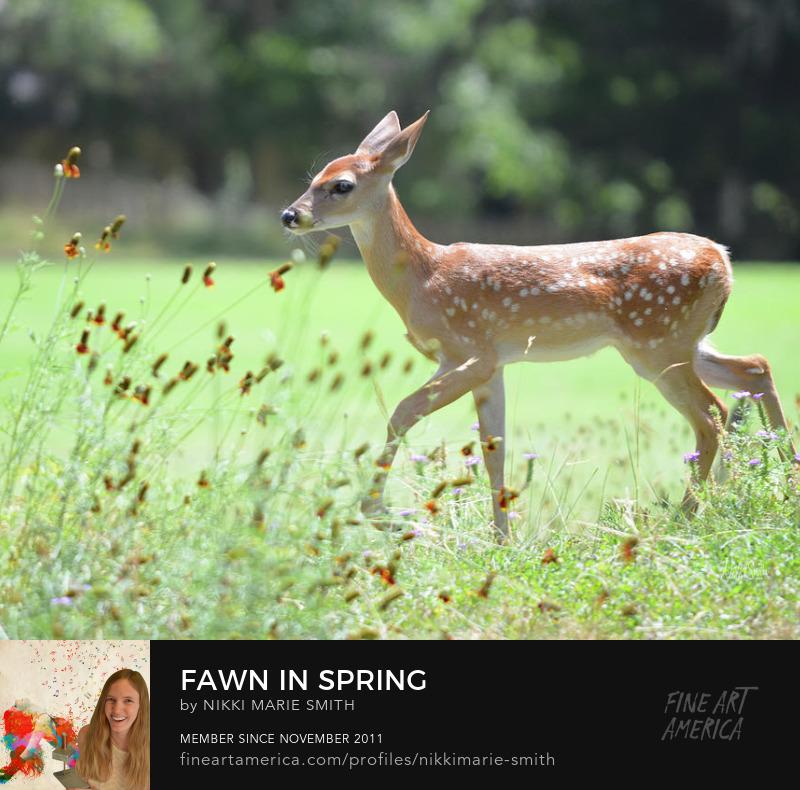 Fawn Fine Art Photography