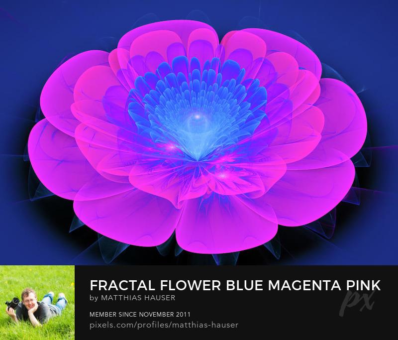 Fractal Flower Art Magenta Blue Pink