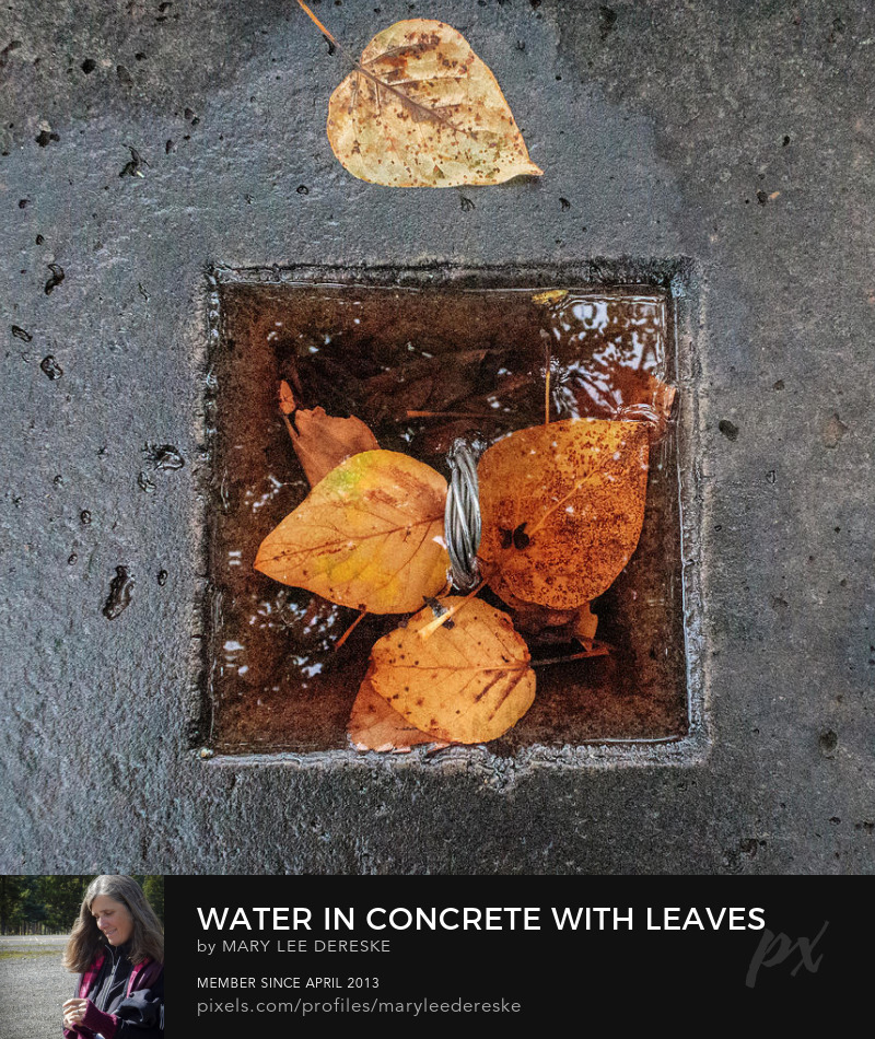 water-in-concrete-with-leaves-mary-lee-dereske