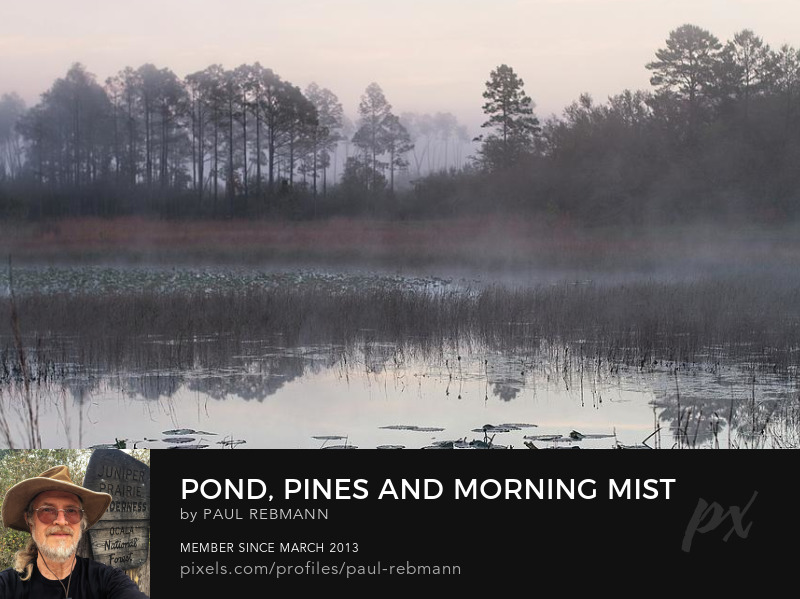 View online purchase options for Pond Pines and Morning Mist by Paul Rebmann