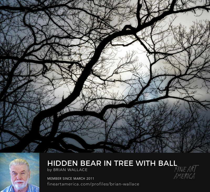Hidden Bear In Tree With Ball by Brian Wallace