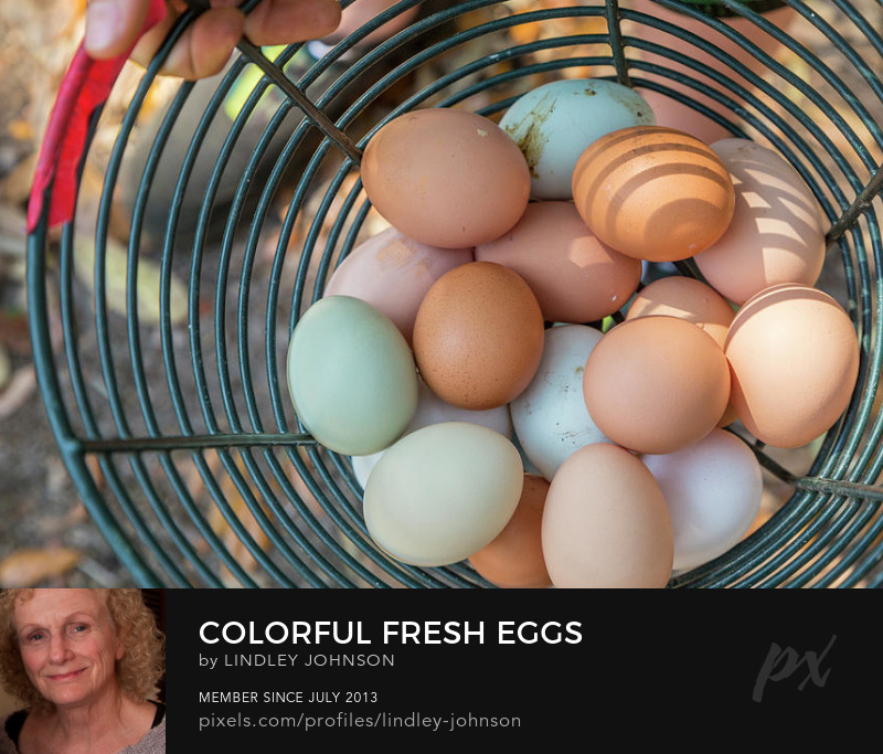 Colorful Fresh Eggs photograph by Lindley Johnson