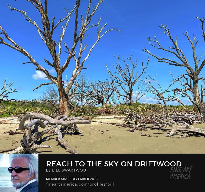 Driftwood Beach Prints