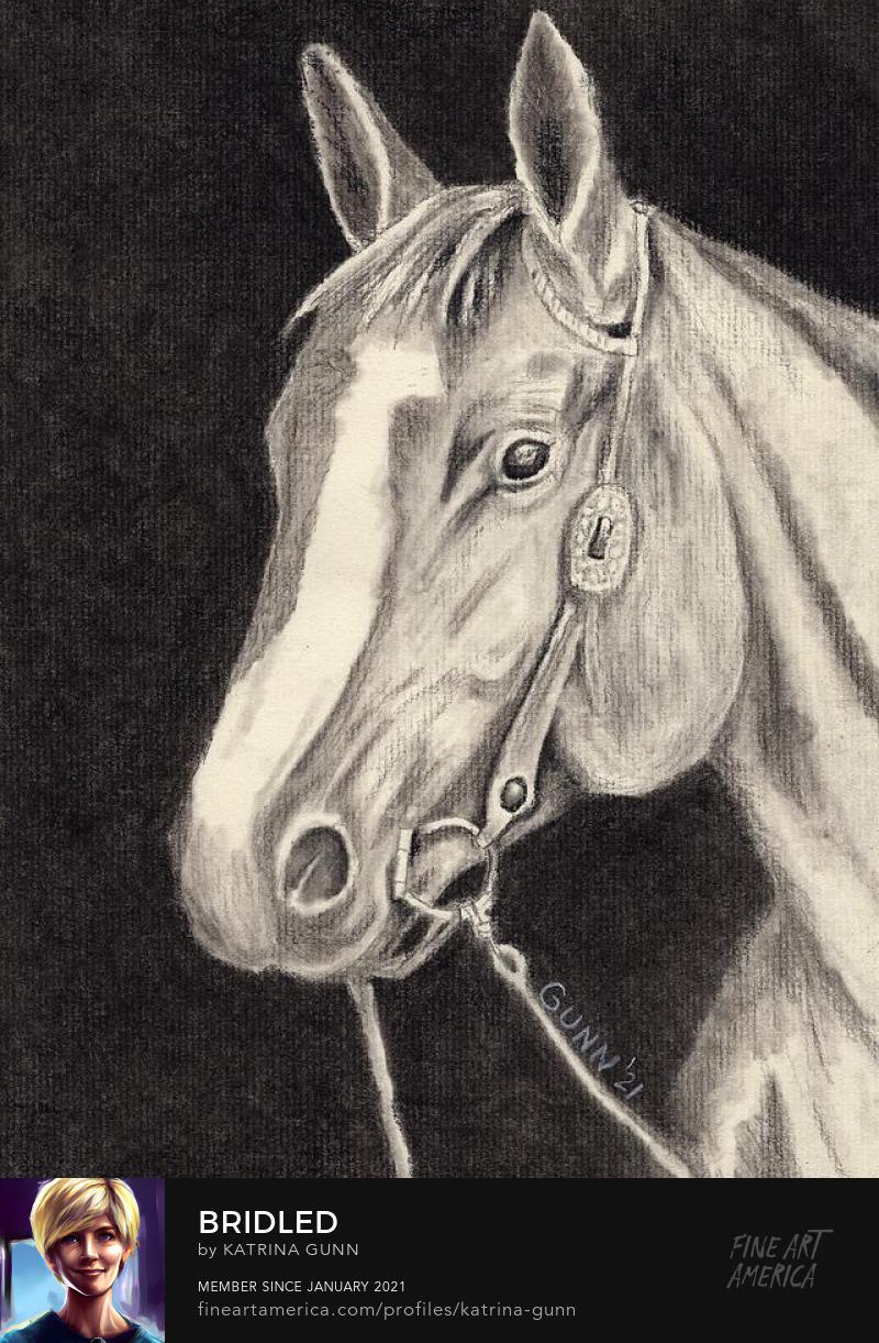 equestrian horse head charcoal drawing