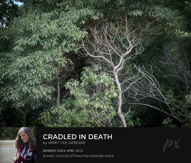 cradled-in-death-mary-lee-dereske