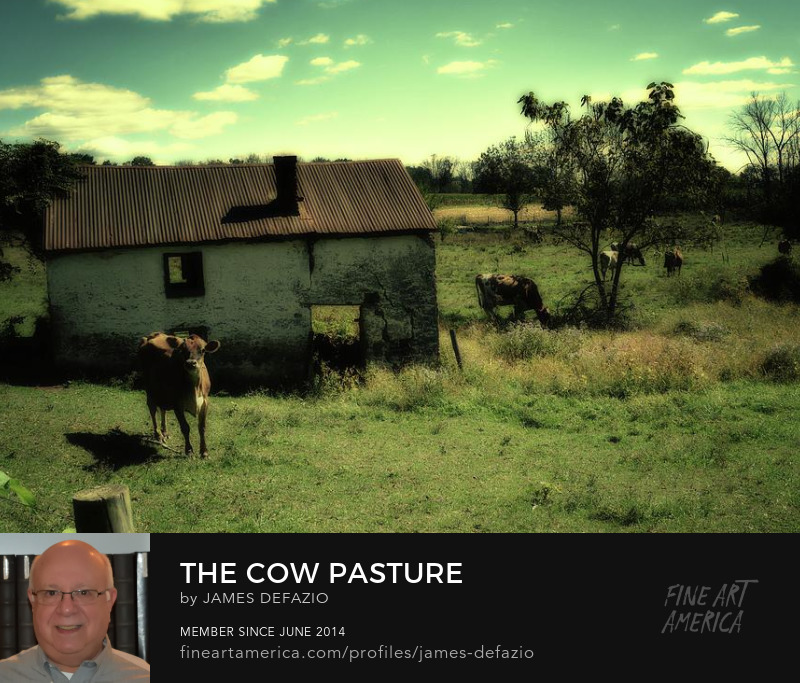 The Cow Pasture