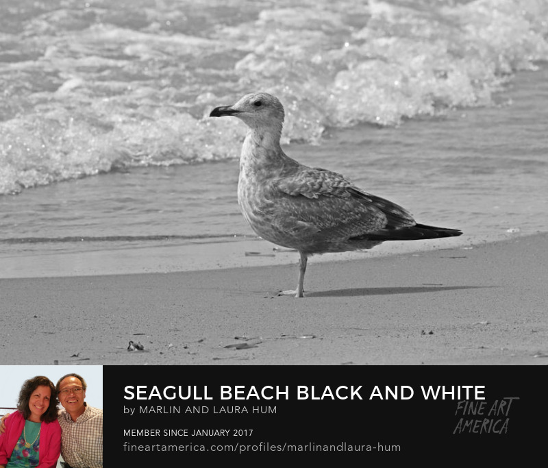 Seagull Beach Black and White by Marlin and Laura Hum