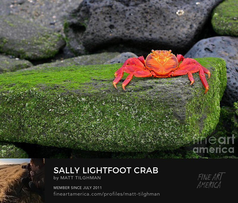sally lightfoot galapagos