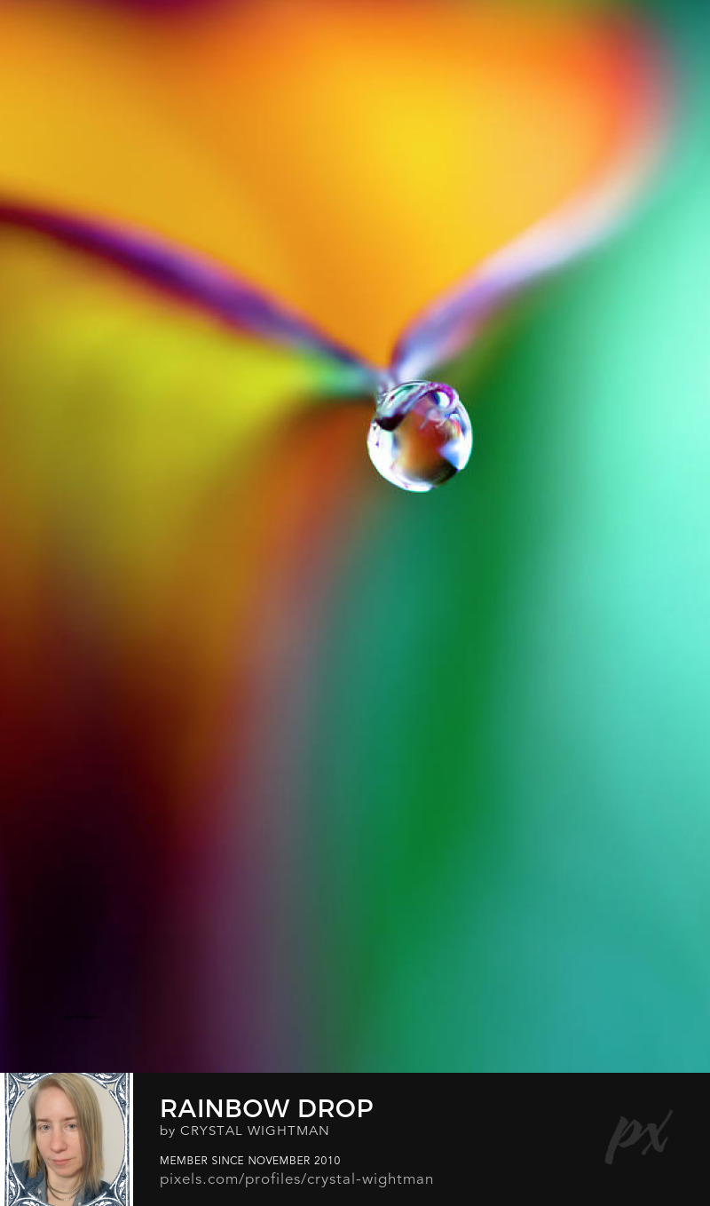 Macro photography of a water drop on a calla lily flower.