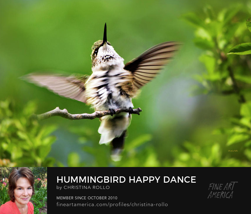 Hummingbird Happy Dance