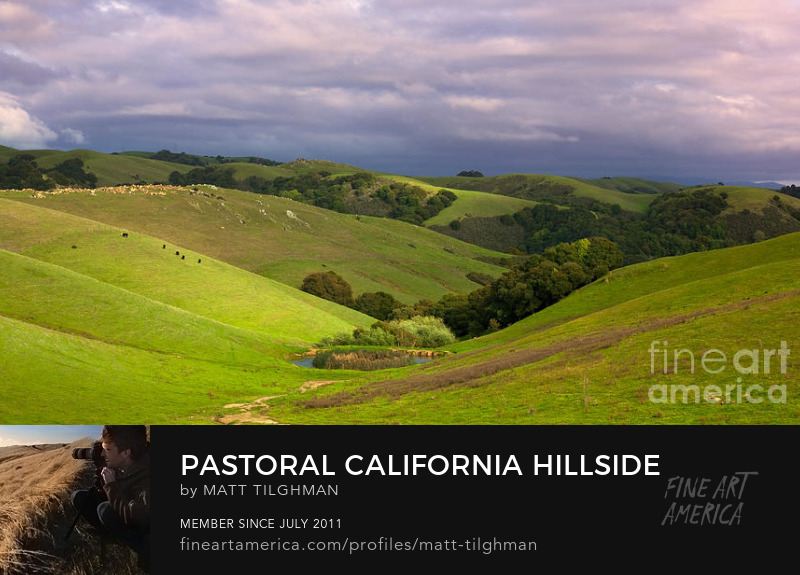 Pastoral California Hillside Art Online