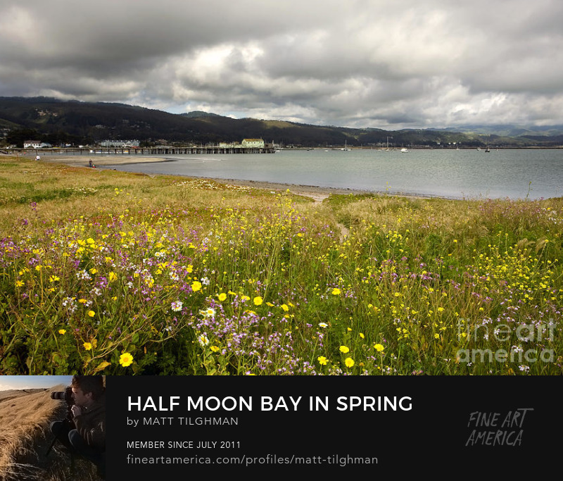 Half Moon Bay Wildflowers Prints