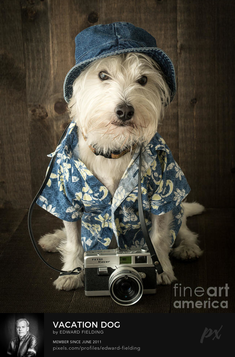dog Photography Prints