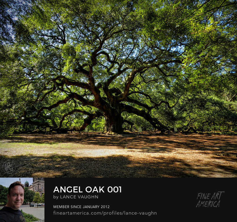 Angel Oak Tree John
