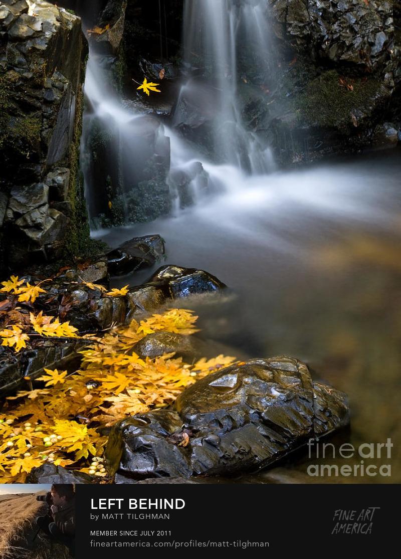 Uvas Canyon Autumn Art Prints