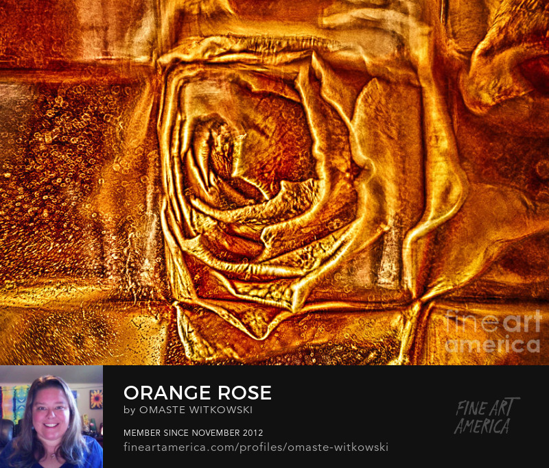 Orange Rose Garden Photography Prints
