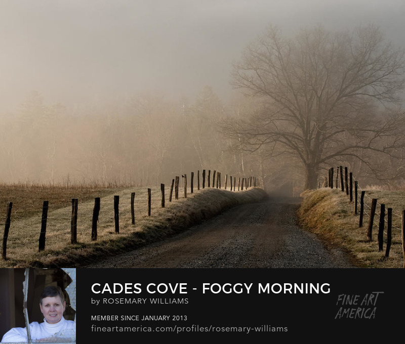 Foggy Morning on Sparks Lane by Rosemary Williams