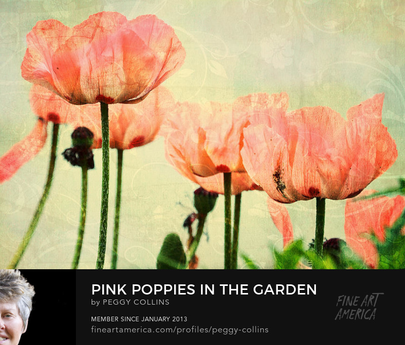 pink poppies photograph by peggy collins