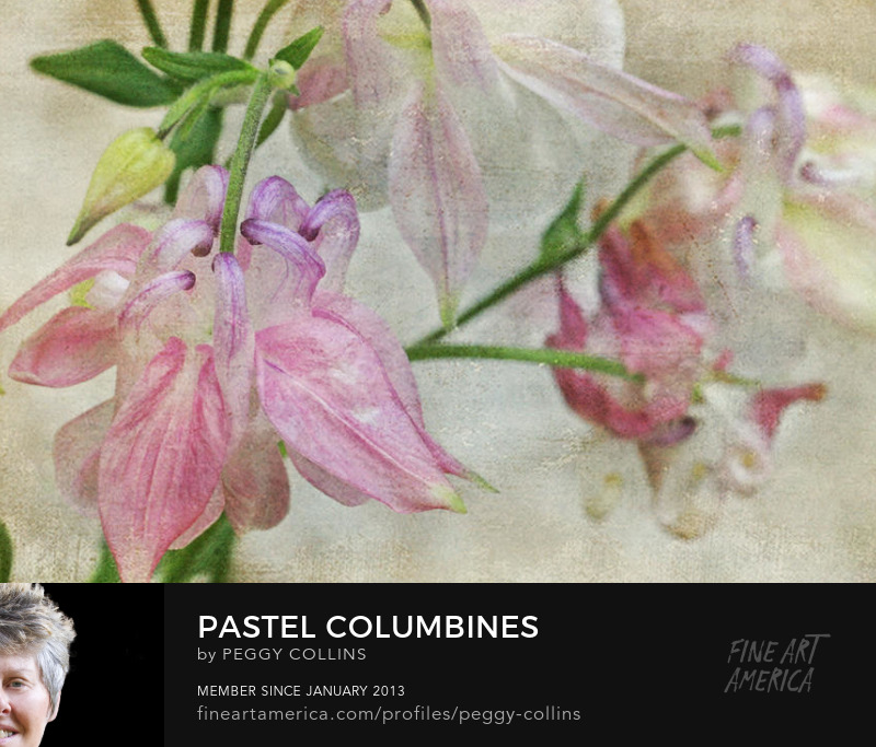 pastel columbines photograph by peggy collins