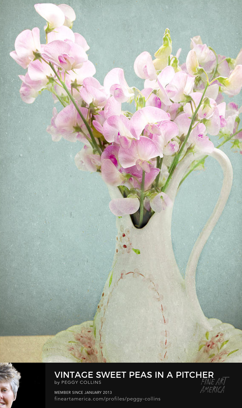 sweet peas in vintage pitcher photograph by Peggy Collins