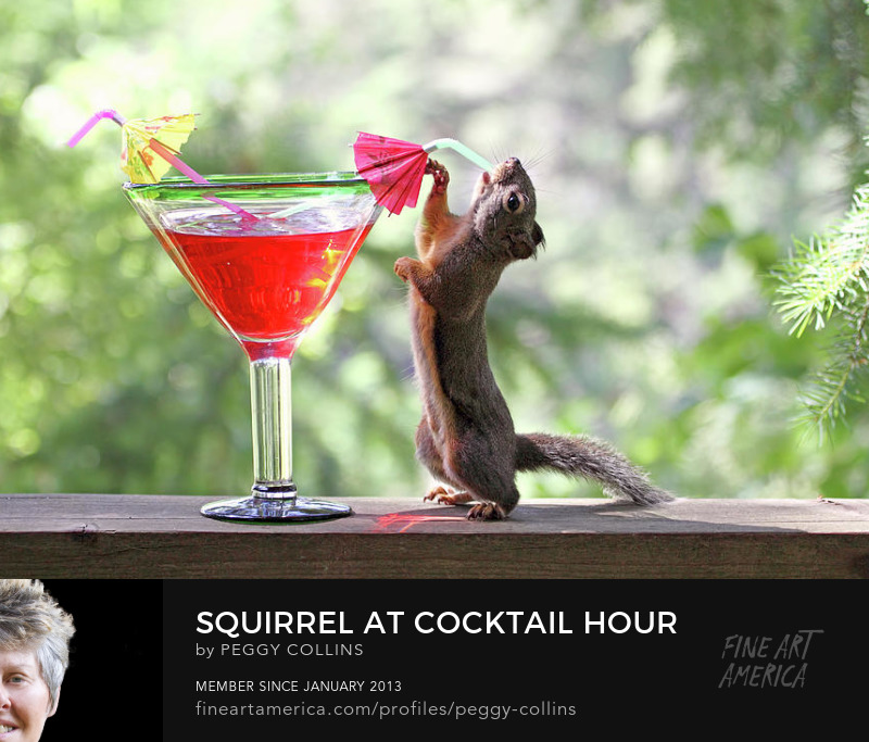 squirrel at cocktail hour photograph by peggy collins