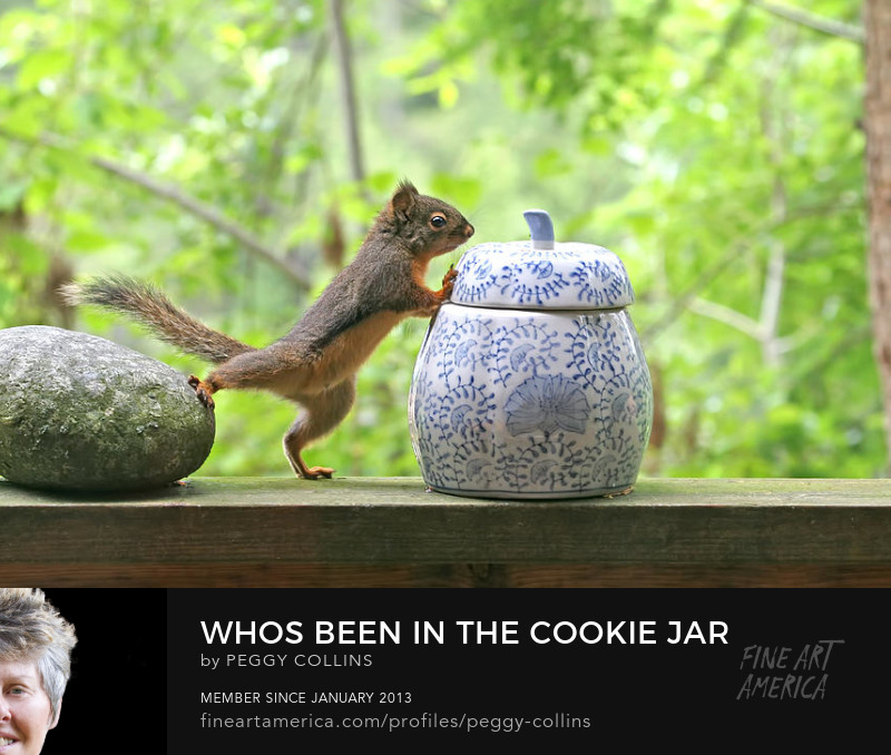 squirrel and cookie jar photograph by peggy collins